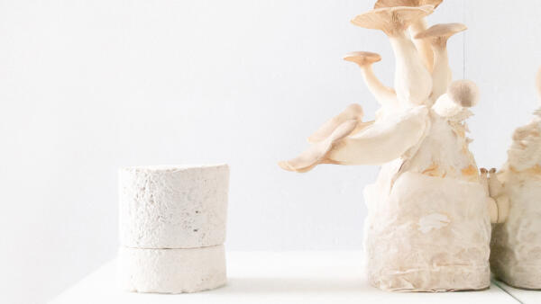 Grown.Bio - Naturally grown materials: Mycelium