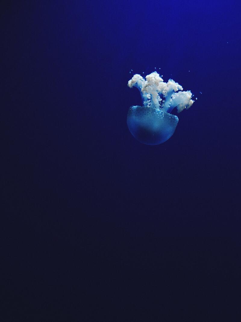 ocean-scaled.jpg